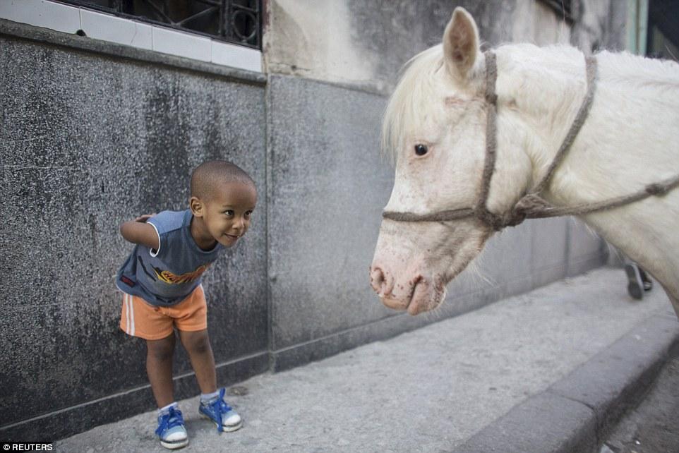 Alexo Carmona, doi ani, se uita la Coco, un ponei in varsta de doi ani, in Havana. Autor: Alexandre Meneghini