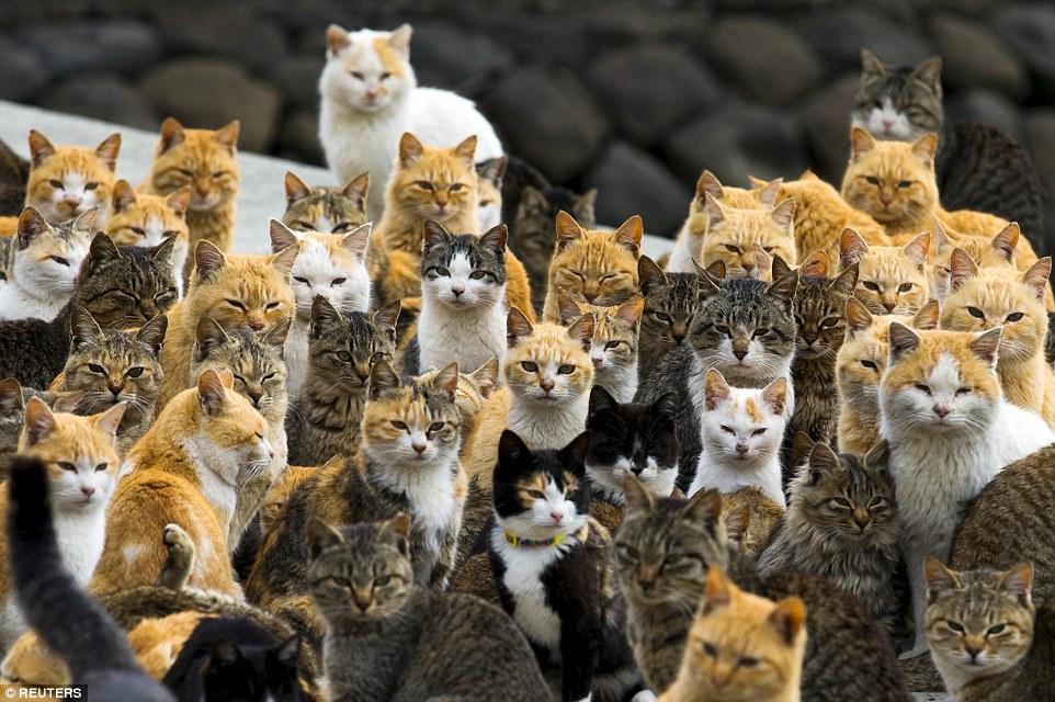 Pisici adunate pe insula Aoshima din sudul Japoniei. Autor: Thomas Peter