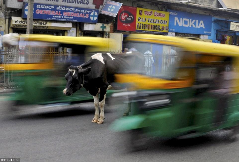 O vacă care stă în mijlocul unui drum aglomerat în Bengaluru, India. Autor: Abhishek N Chinnappa
