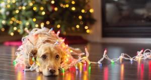 Tu mai trimiți mesaje de Crăciun?